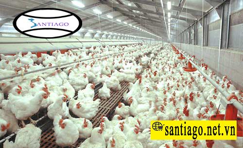 tôn nhựa chống nóng chống ăn mòn chống rỉ cho nông trại nuôi gà